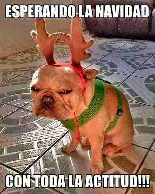 Imagenes Graciosas Para Felicitar Navidad.Las Imagenes Mas Graciosas Para Felicitar La Navidad Y El