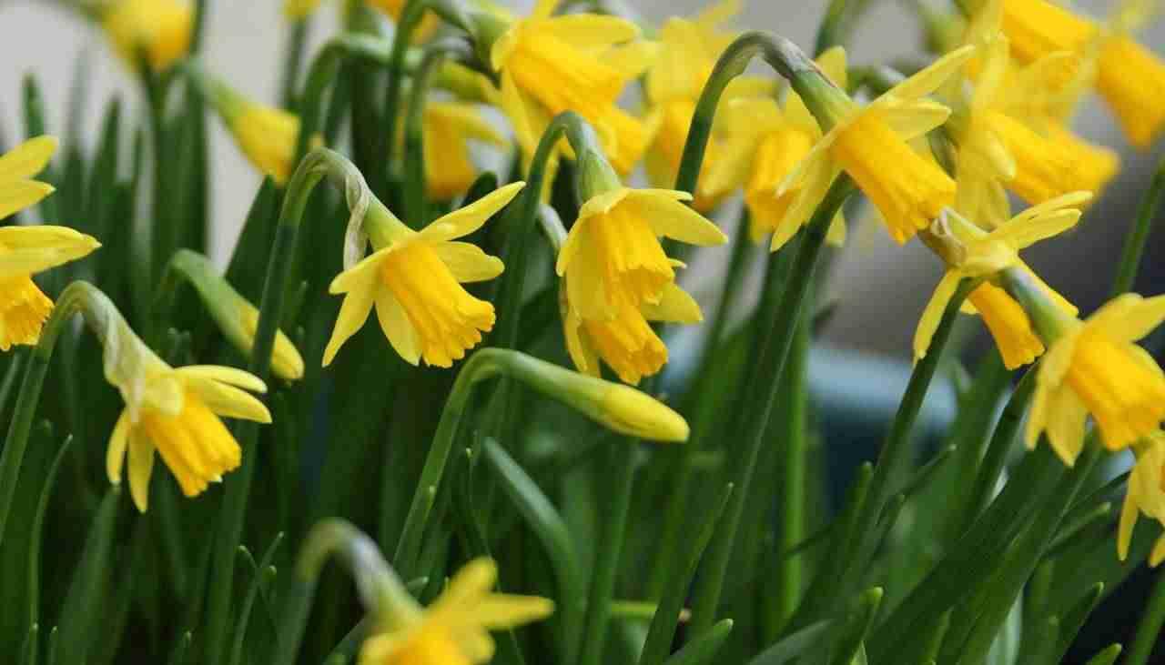 Calendario de flores de temporada