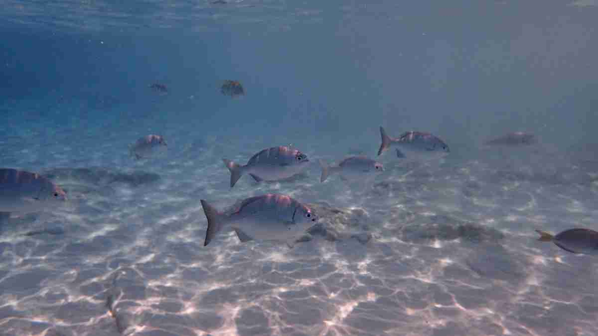 Preciosa Isla de Cozumel en el Caribe mexicano para un viaje de relax 6