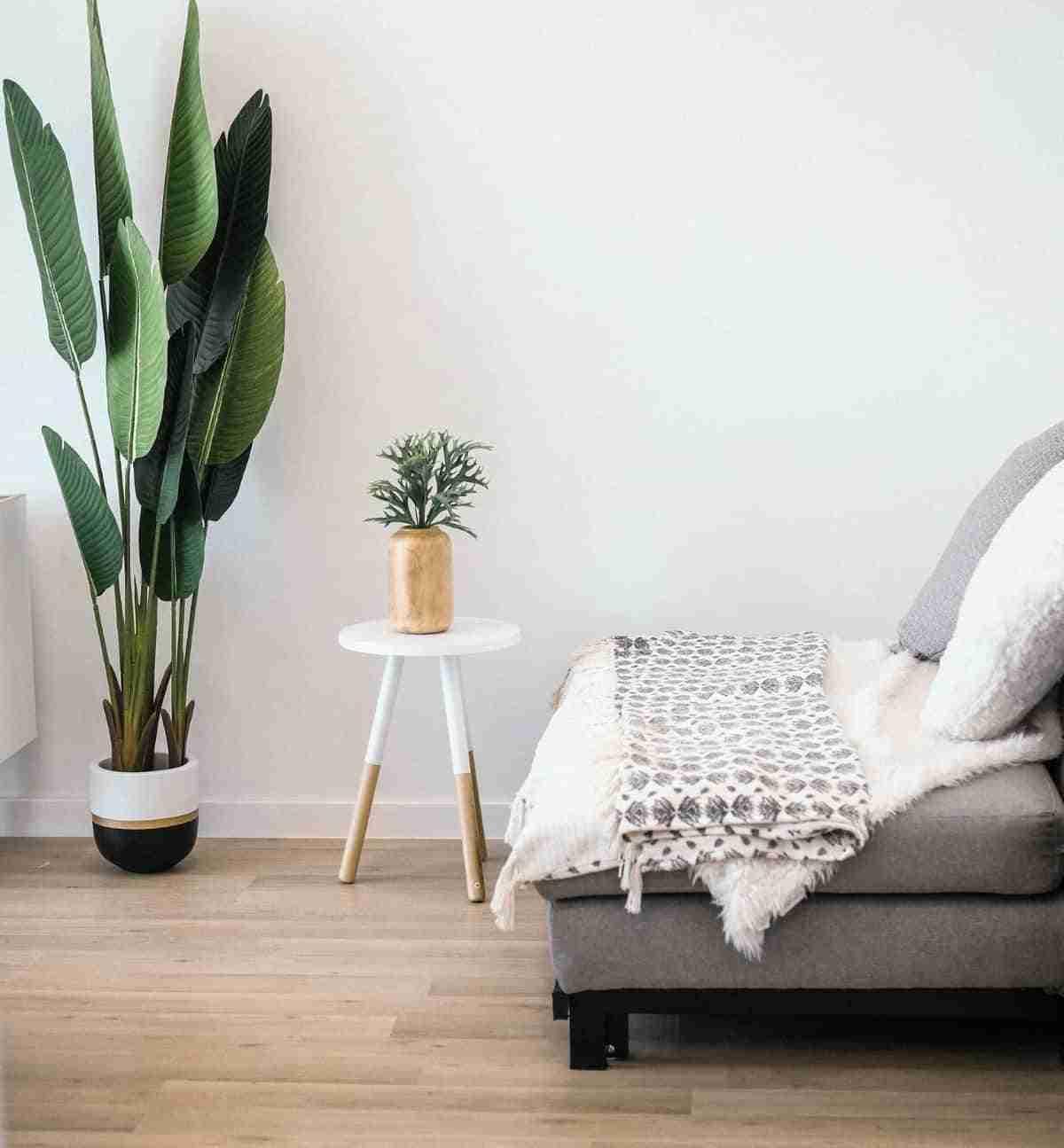 mejores plantas para interiores
