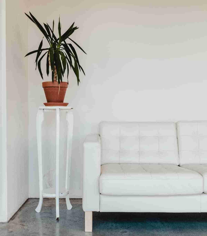 plantas para interiores dracena