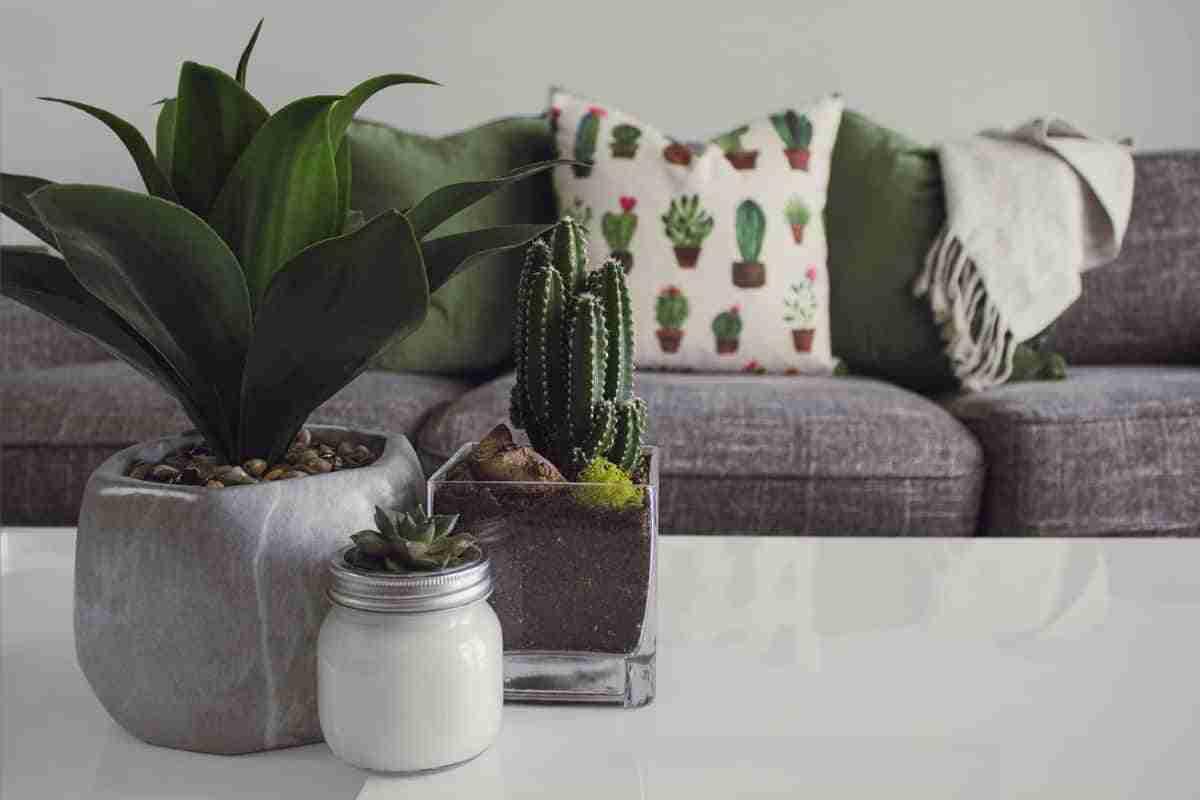 suculentas y cactus plantas para interiores
