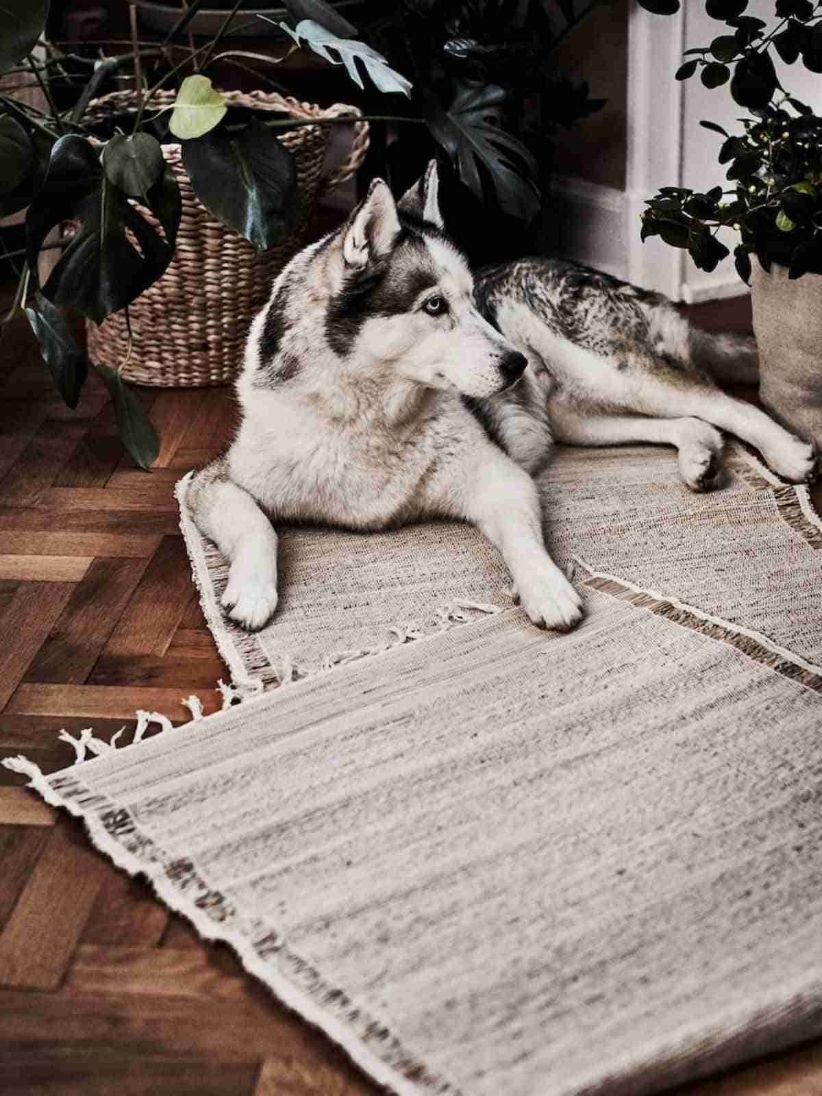 alfombra botanisk ikea
