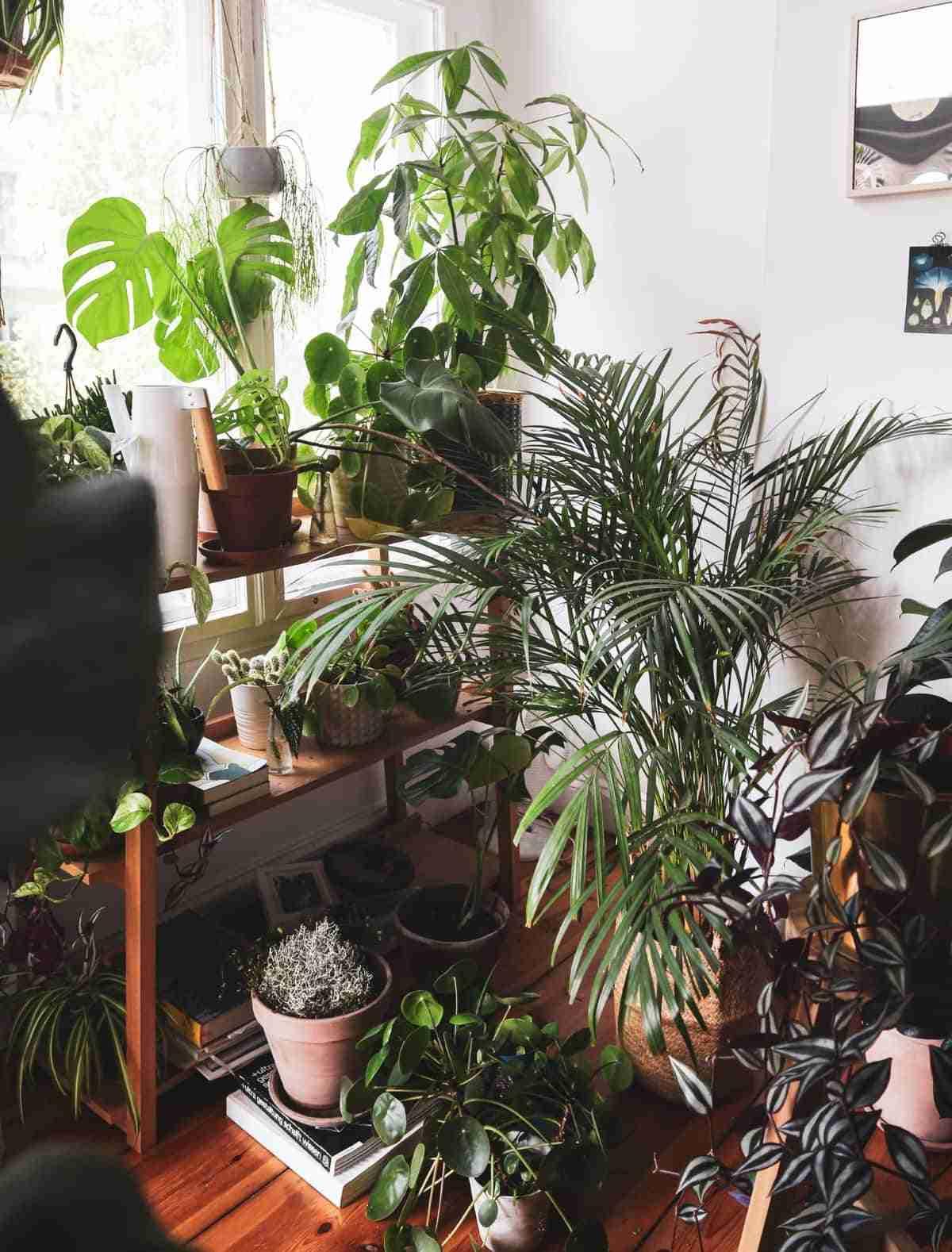 plantas de interior en el hogar