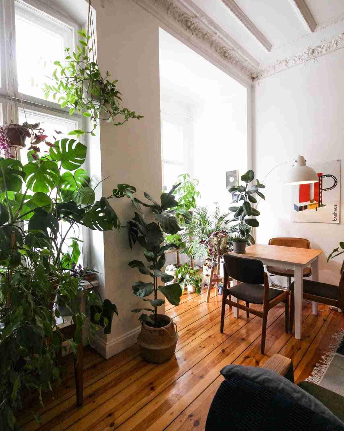 plantas de interior para decorar ambientes