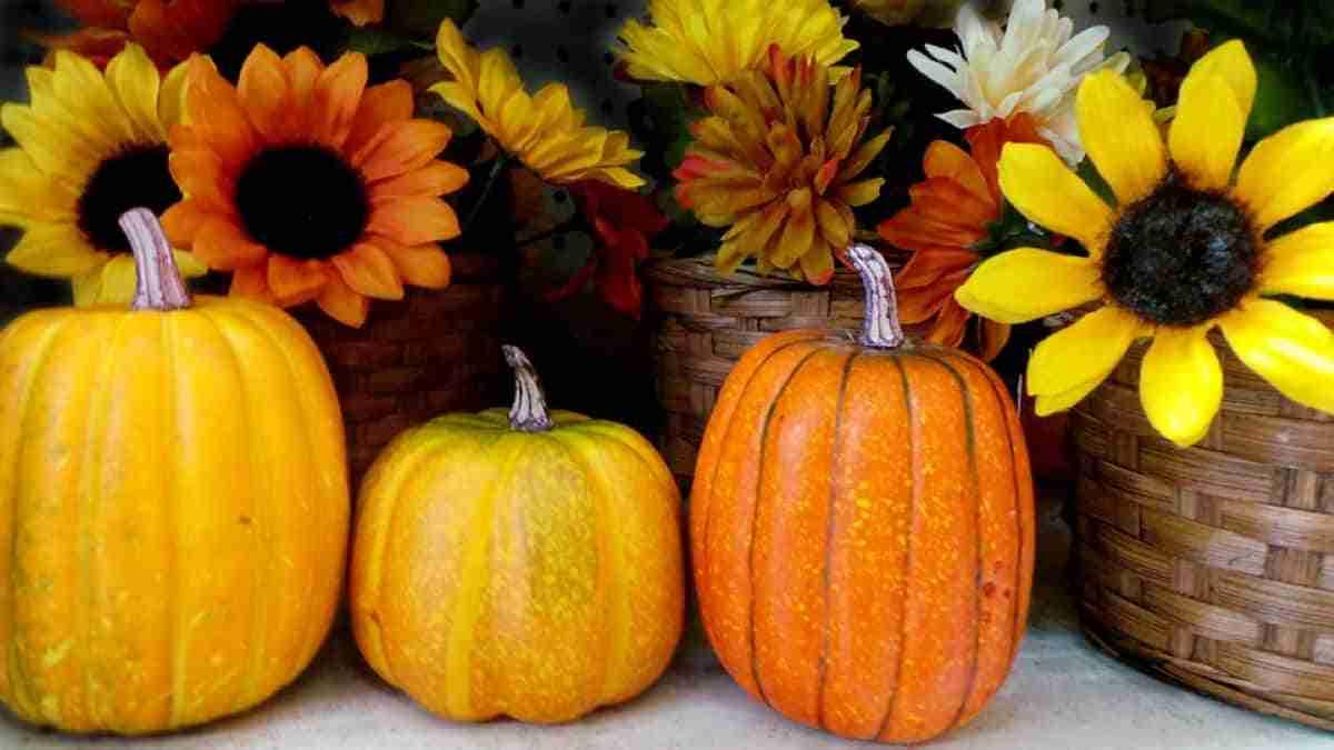 calabazas y girasoles para decorar en halloween