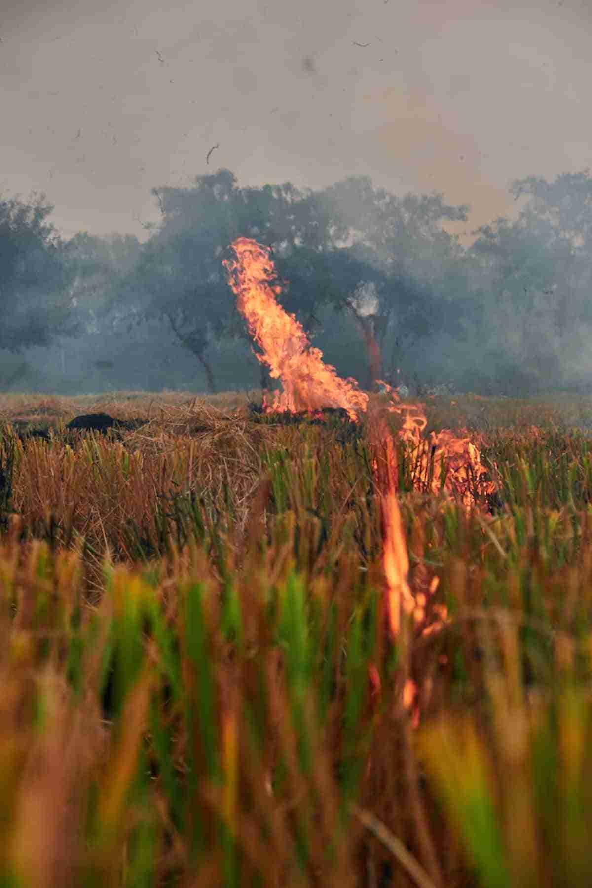 la quema de los tallos del arroz contamina el aire