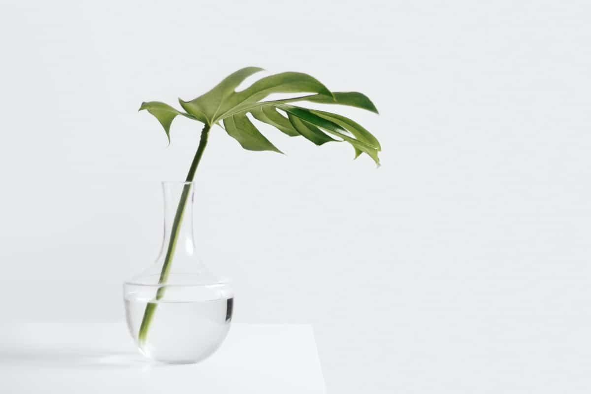 plantas con hidrocultivo