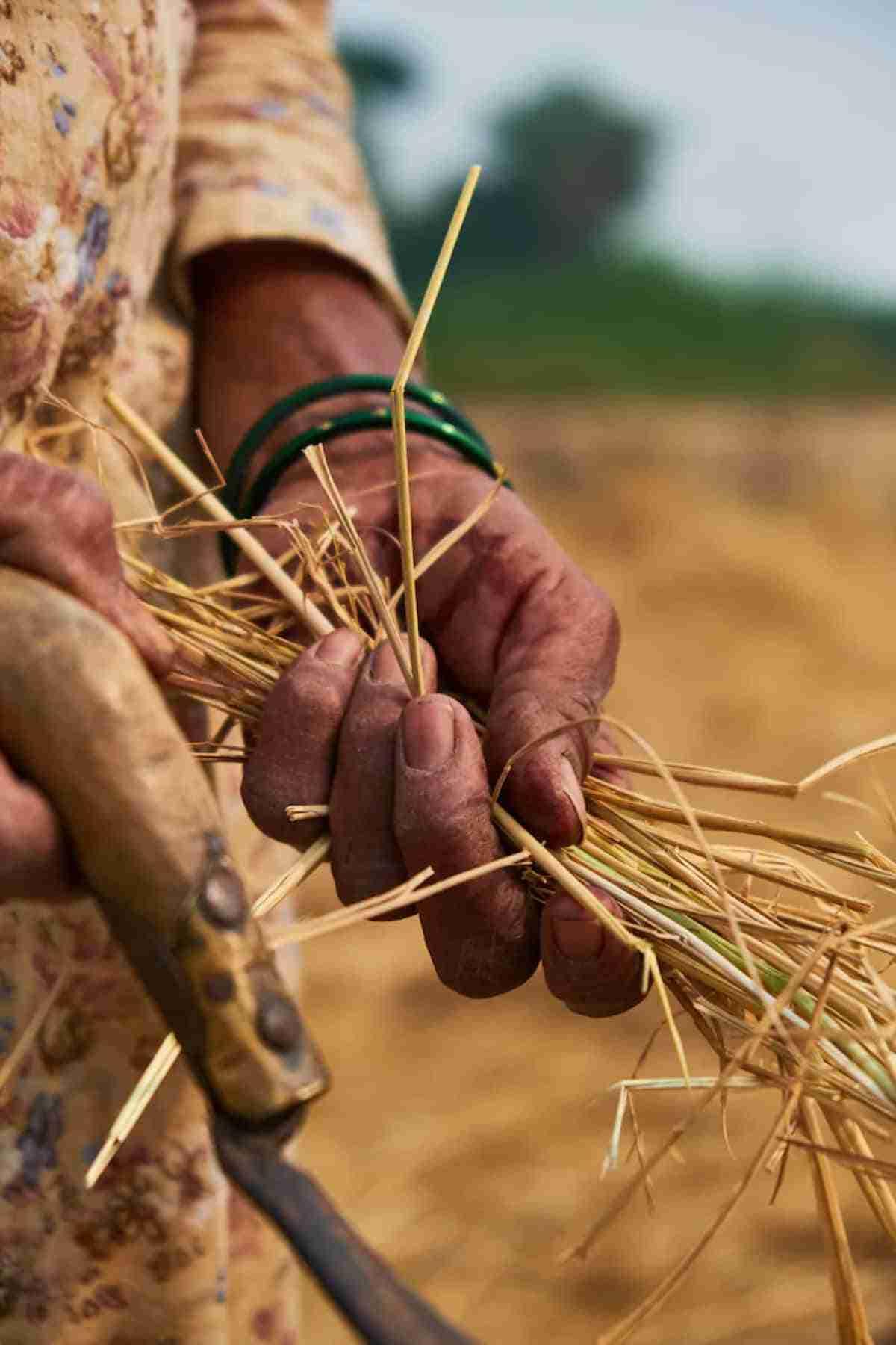 reciclar la paja de arroz para reducir la contaminacion del aire