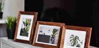 tres cuadros con hojas