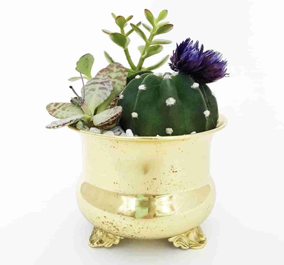 especies de cactus
