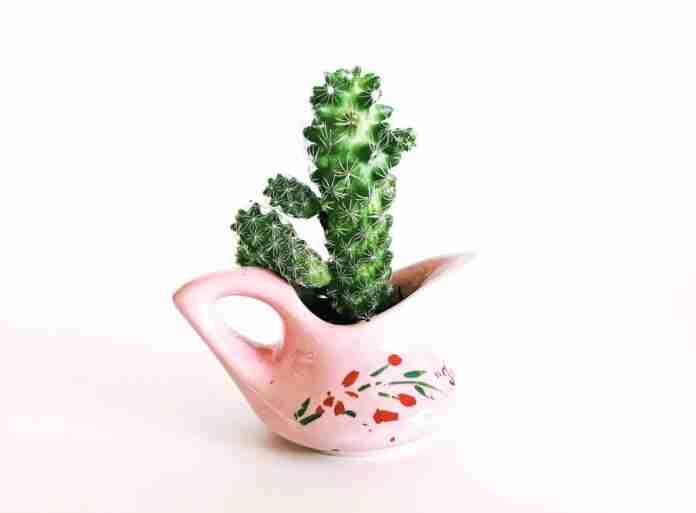 riego de los cactus