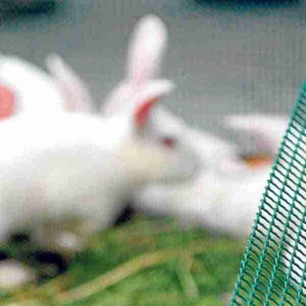 Ganaderos de conejos en la ruina por la crisis de costes
