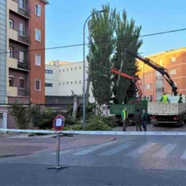 En marcha el Plan de Podas 2021-2022 del Ayuntamiento de Cuenca que se desarrollará hasta el mes de marzo